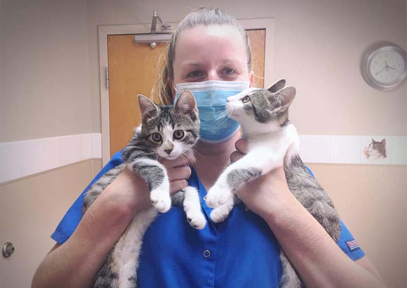 Cat Veterinary Care, Richmond Heights