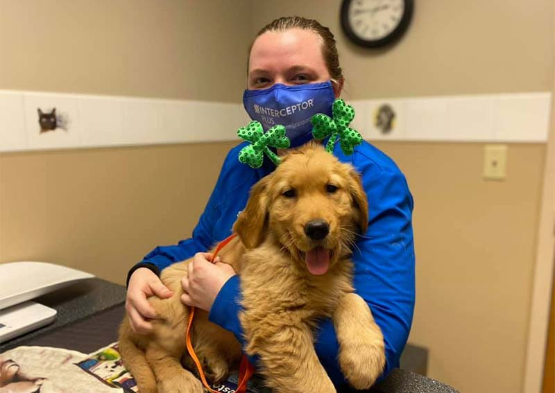 Dog Veterinary Care, Richmond Heights